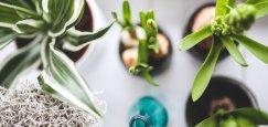 consejos para mantener el frescor en casa