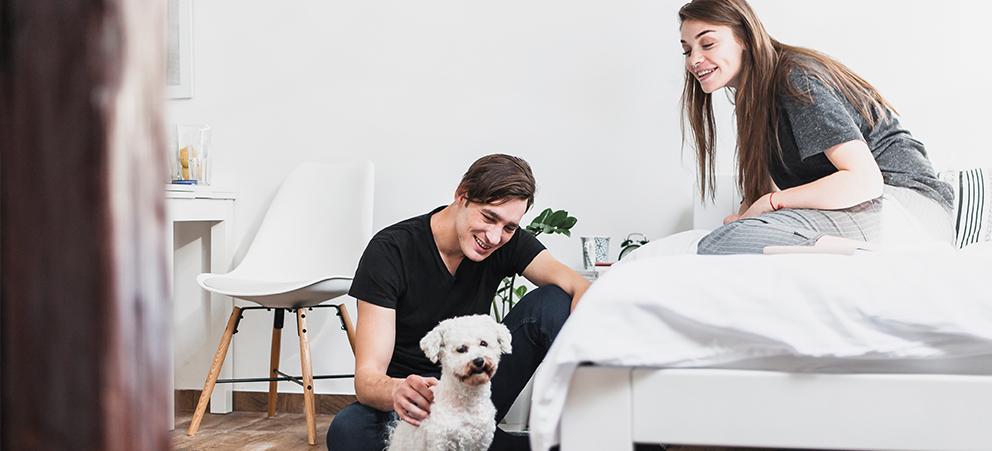 Mudanza con mascotas: todo lo que necesita saber