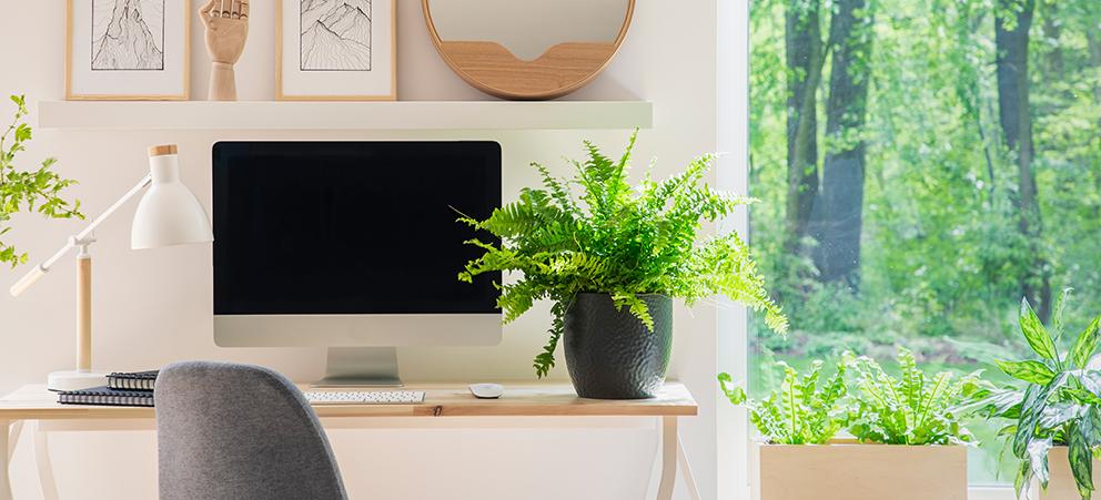 Plantas en el hogar: beneficios